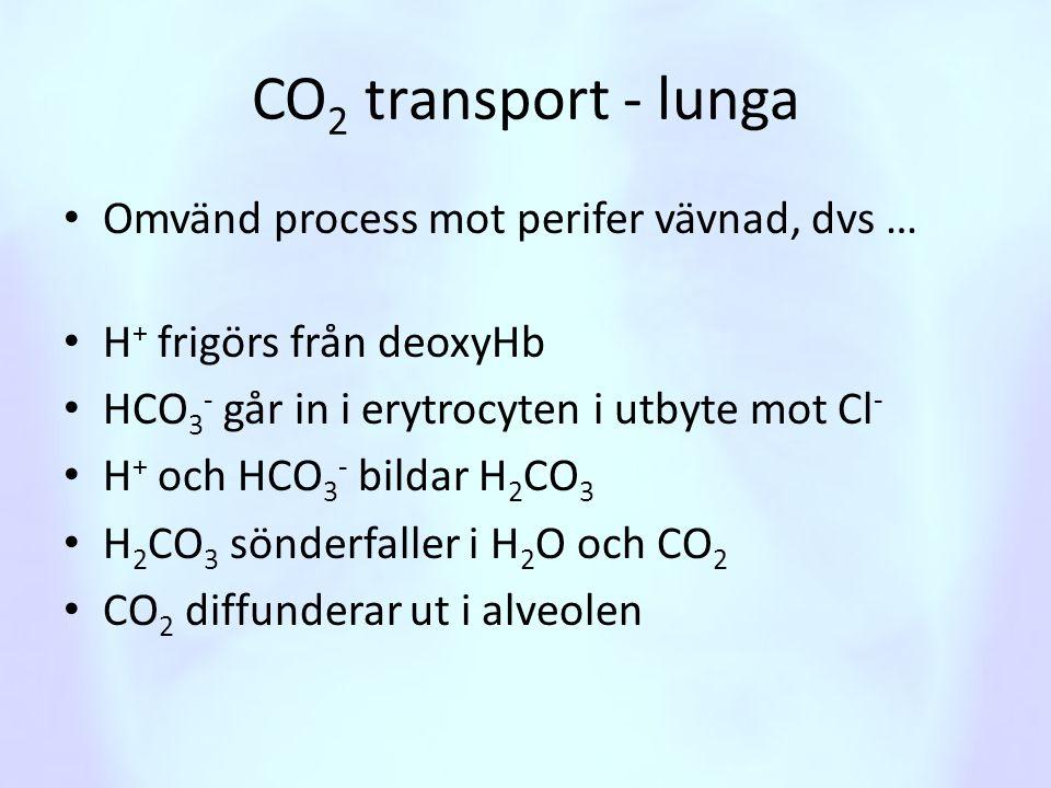 CO 2 transport - lunga • Omvänd process mot perifer vävnad, dvs … • H + frigörs från deoxyHb • HCO 3 - går in i erytrocyten i utbyte mot Cl - • H + oc