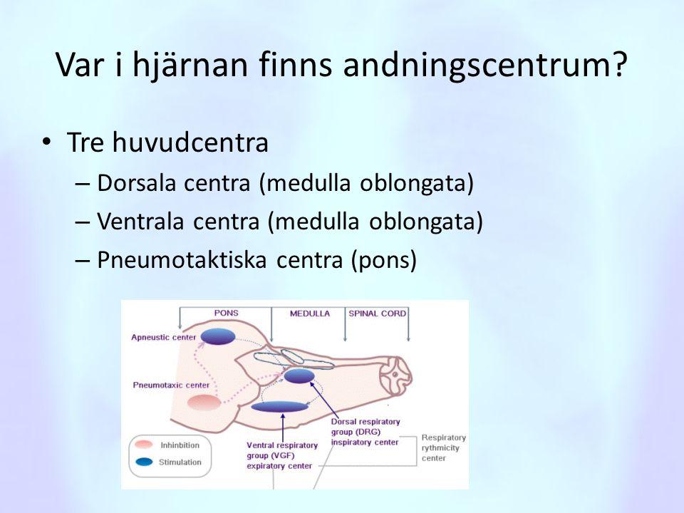 Var i hjärnan finns andningscentrum? • Tre huvudcentra – Dorsala centra (medulla oblongata) – Ventrala centra (medulla oblongata) – Pneumotaktiska cen