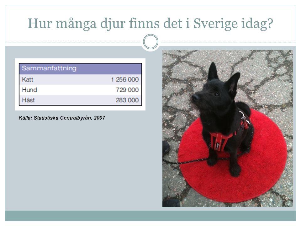 Hur många djur finns det i Sverige idag? Källa: Statistiska Centralbyrån, 2007