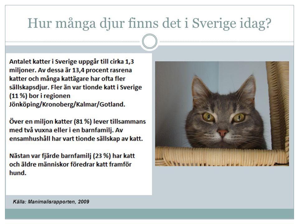 Källa: Manimalisrapporten, 2009 Hur många djur finns det i Sverige idag?