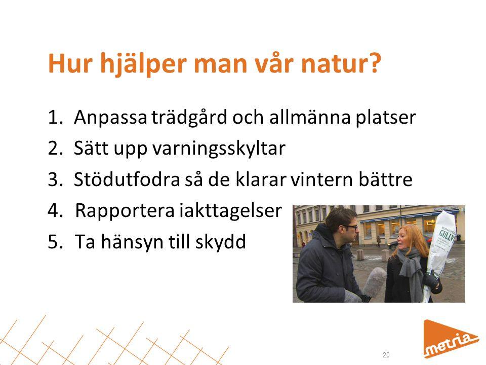 Hur hjälper man vår natur? 1. Anpassa trädgård och allmänna platser 2. Sätt upp varningsskyltar 3. Stödutfodra så de klarar vintern bättre 4.Rapporter