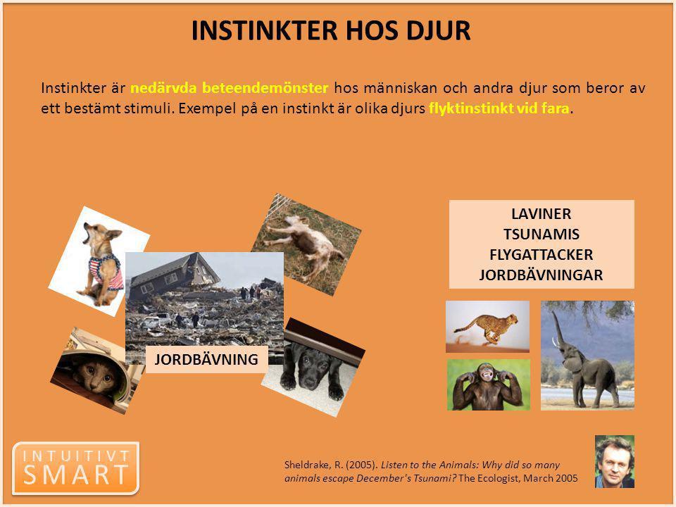 INTUITIVT SMART INTUITIVT SMART INSTINKTER HOS DJUR Instinkter är nedärvda beteendemönster hos människan och andra djur som beror av ett bestämt stimu