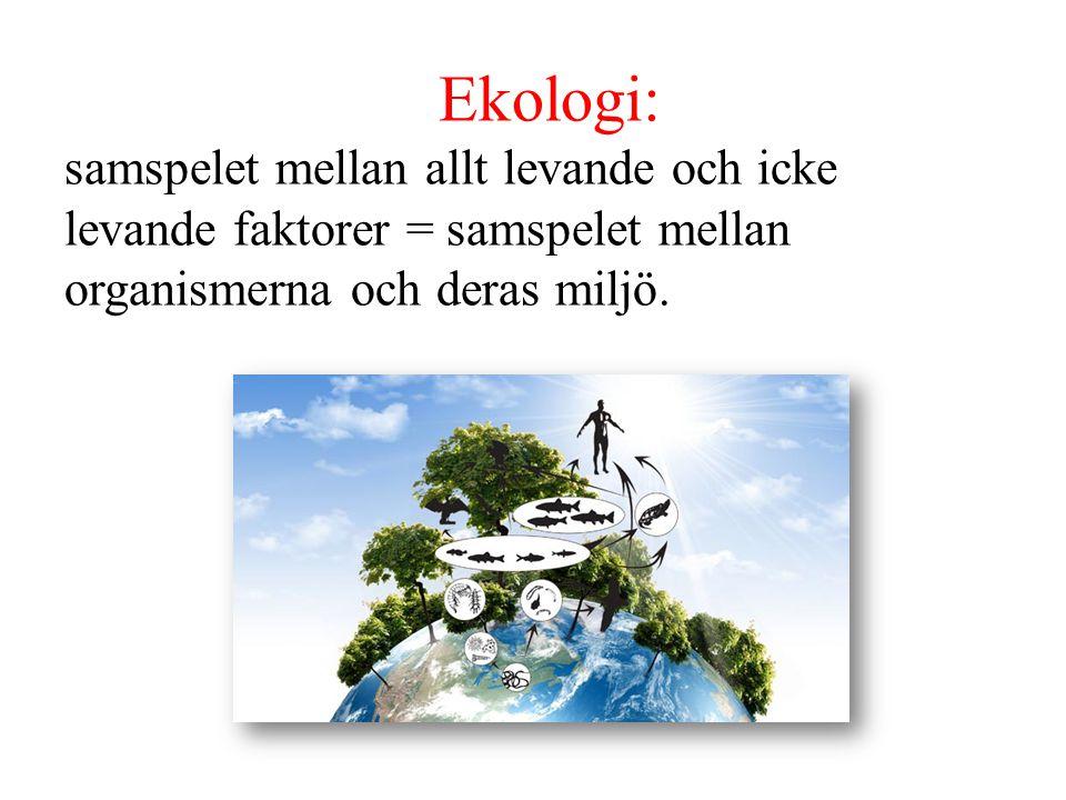 Ekologi: samspelet mellan allt levande och icke levande faktorer = samspelet mellan organismerna och deras miljö.