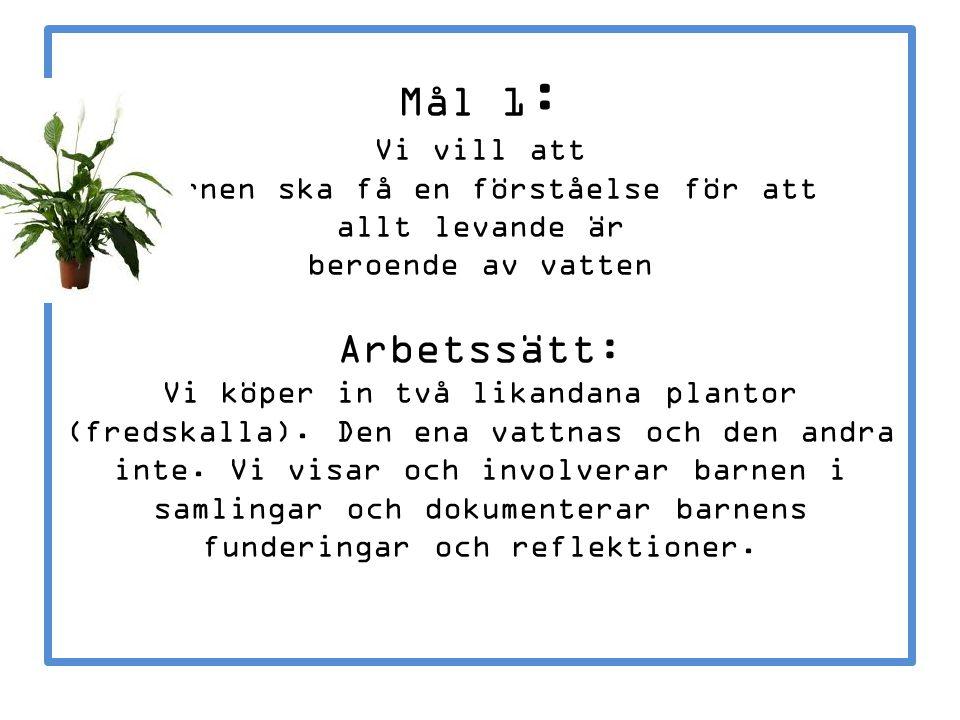 Mål 1 : Vi vill att barnen ska få en förståelse för att allt levande är beroende av vatten Arbetssätt: Vi köper in två likandana plantor (fredskalla).