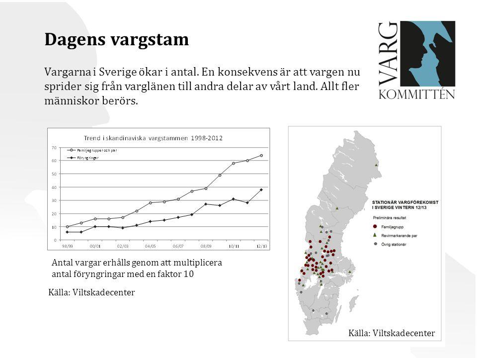 Dagens vargstam Vargarna i Sverige ökar i antal.