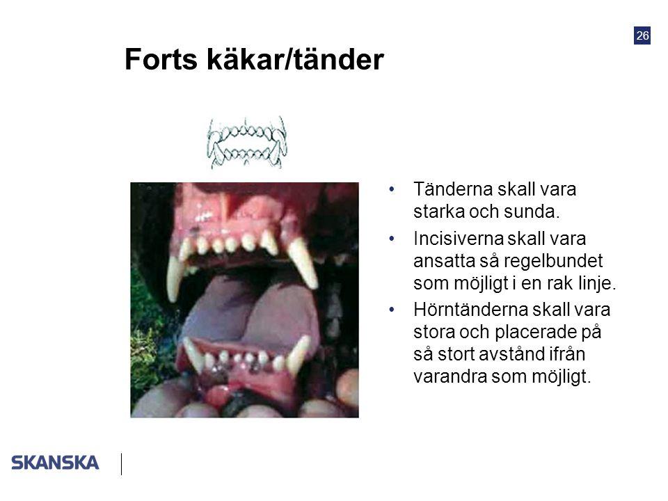 26 Forts käkar/tänder •Tänderna skall vara starka och sunda. •Incisiverna skall vara ansatta så regelbundet som möjligt i en rak linje. •Hörntänderna