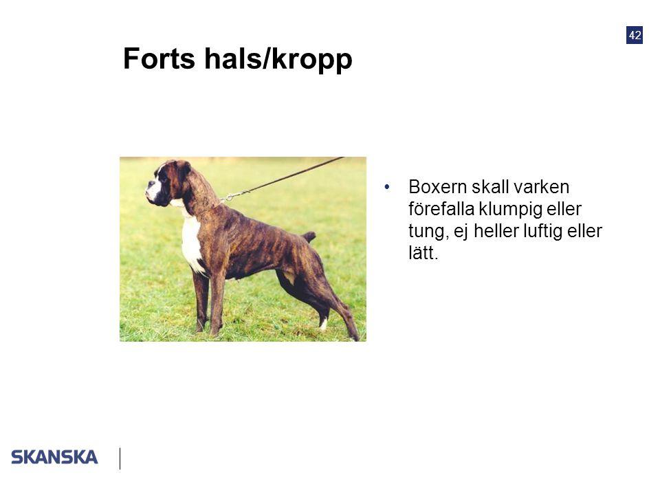 42 Forts hals/kropp •Boxern skall varken förefalla klumpig eller tung, ej heller luftig eller lätt.