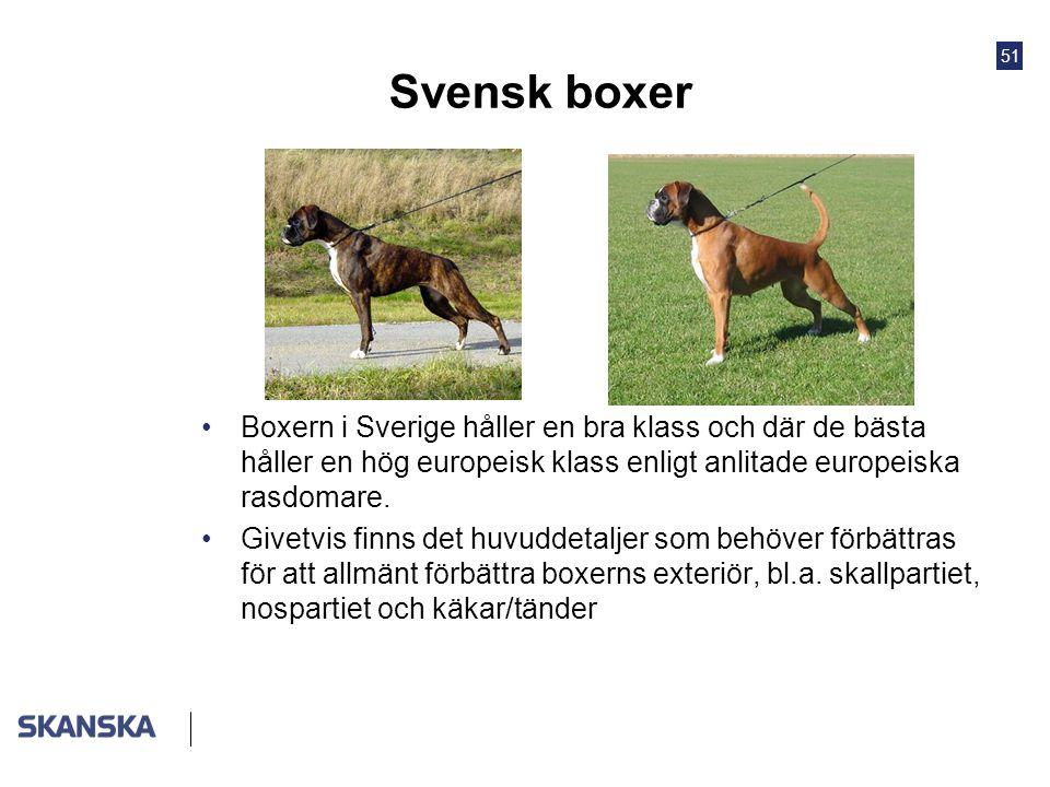 51 Svensk boxer •Boxern i Sverige håller en bra klass och där de bästa håller en hög europeisk klass enligt anlitade europeiska rasdomare. •Givetvis f