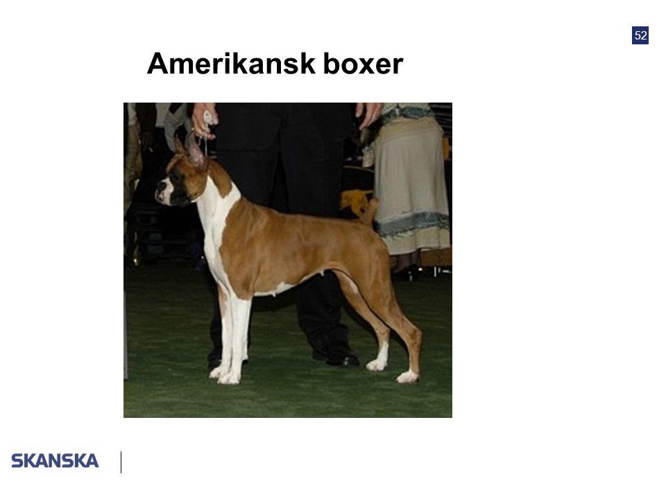52 Amerikansk boxer
