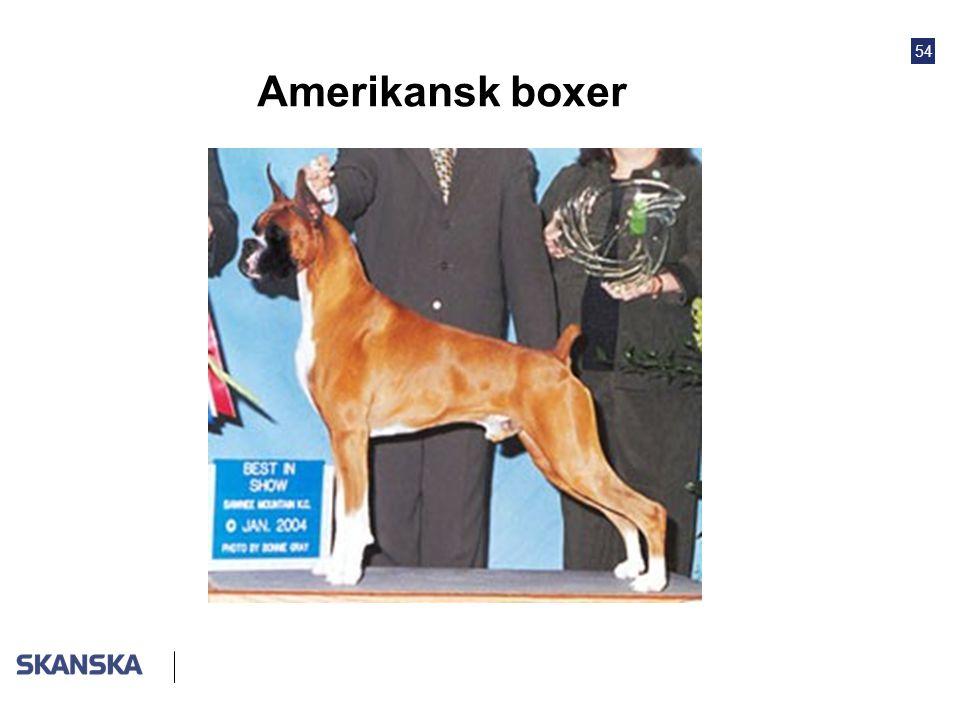 54 Amerikansk boxer