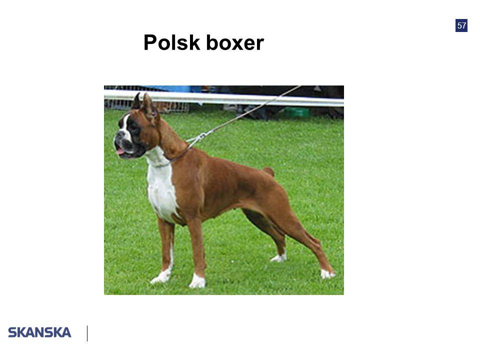 57 Polsk boxer