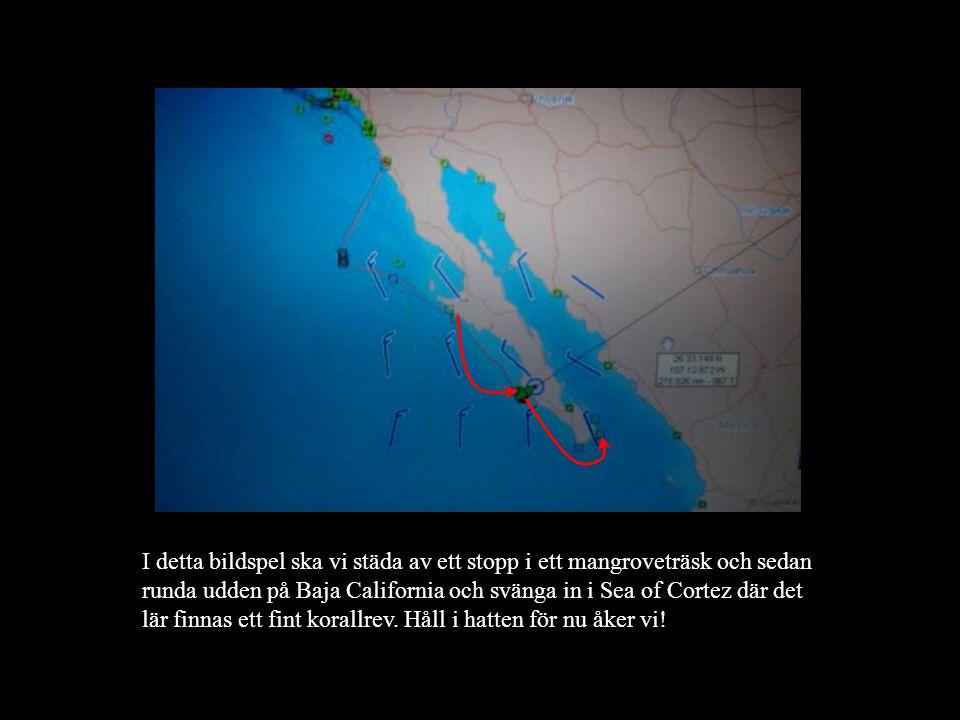 I detta bildspel ska vi städa av ett stopp i ett mangroveträsk och sedan runda udden på Baja California och svänga in i Sea of Cortez där det lär finnas ett fint korallrev.