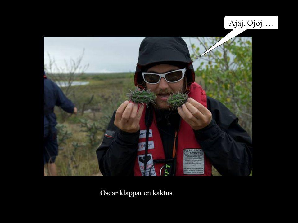 Ajaj, Ojoj…. Oscar klappar en kaktus.