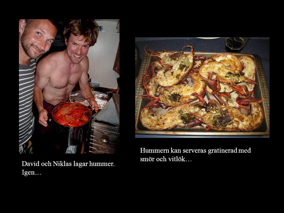 David och Niklas lagar hummer. Igen… Hummern kan serveras gratinerad med smör och vitlök…