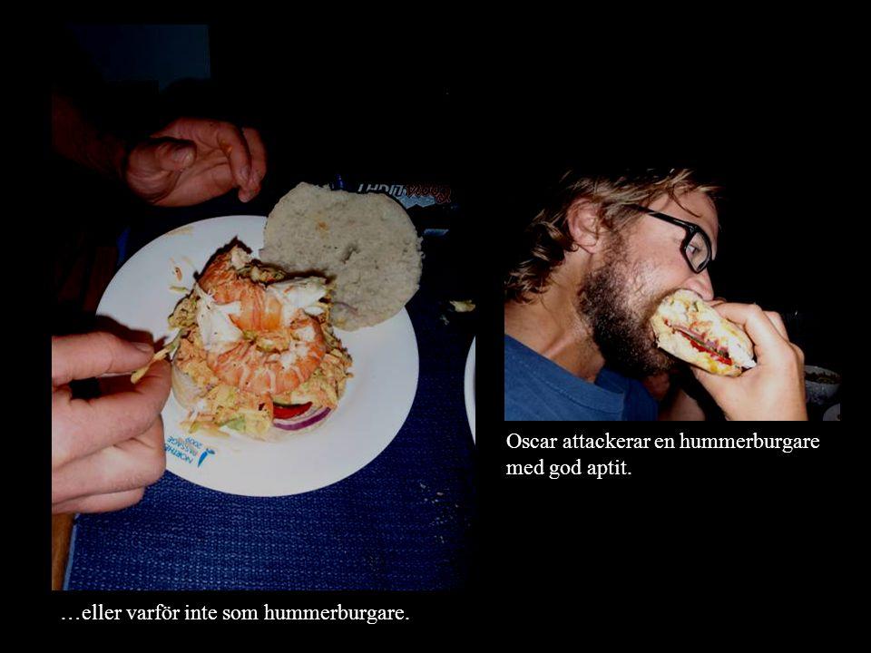 …eller varför inte som hummerburgare. Oscar attackerar en hummerburgare med god aptit.
