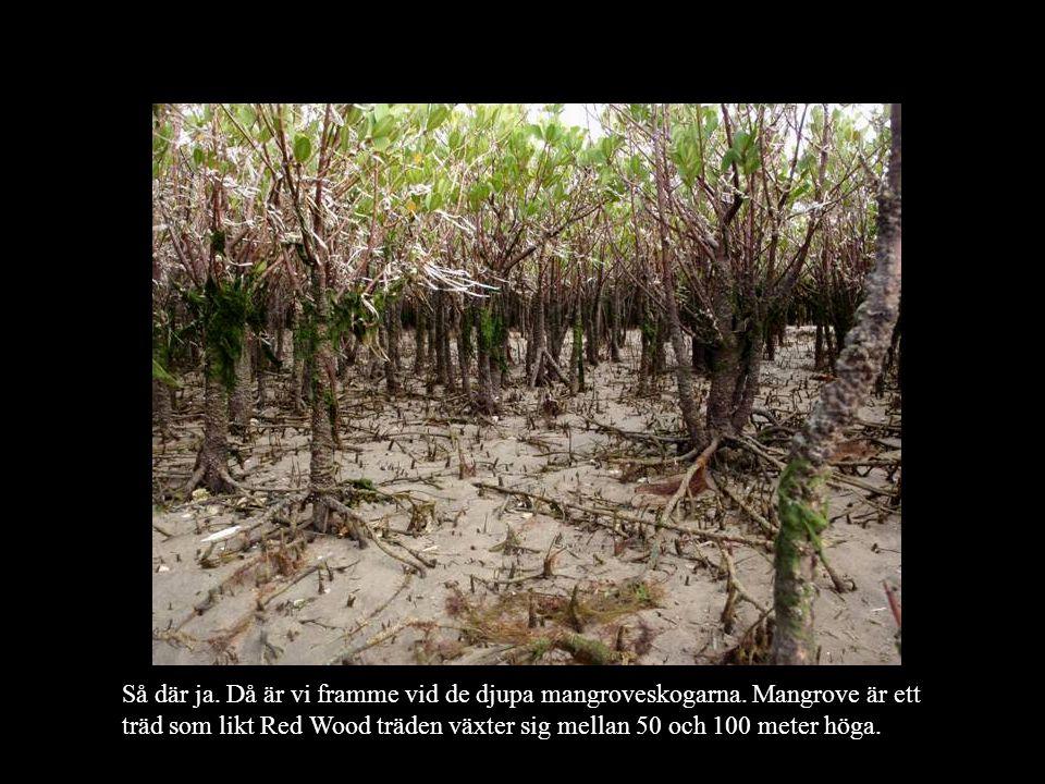 Så där ja. Då är vi framme vid de djupa mangroveskogarna.