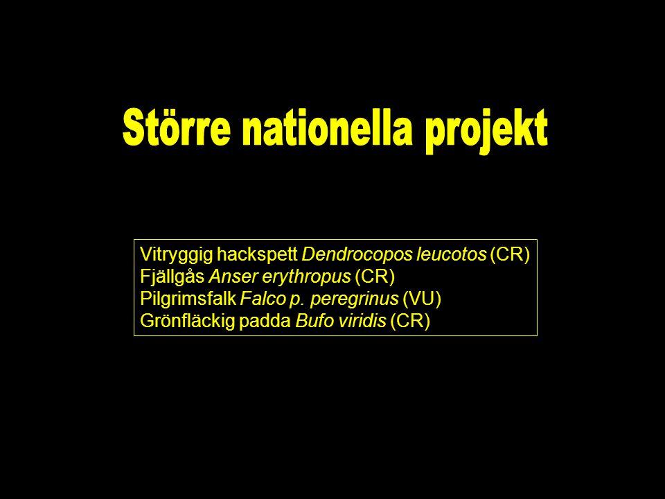 Vitryggig hackspett Dendrocopos leucotos (CR) Fjällgås Anser erythropus (CR) Pilgrimsfalk Falco p.