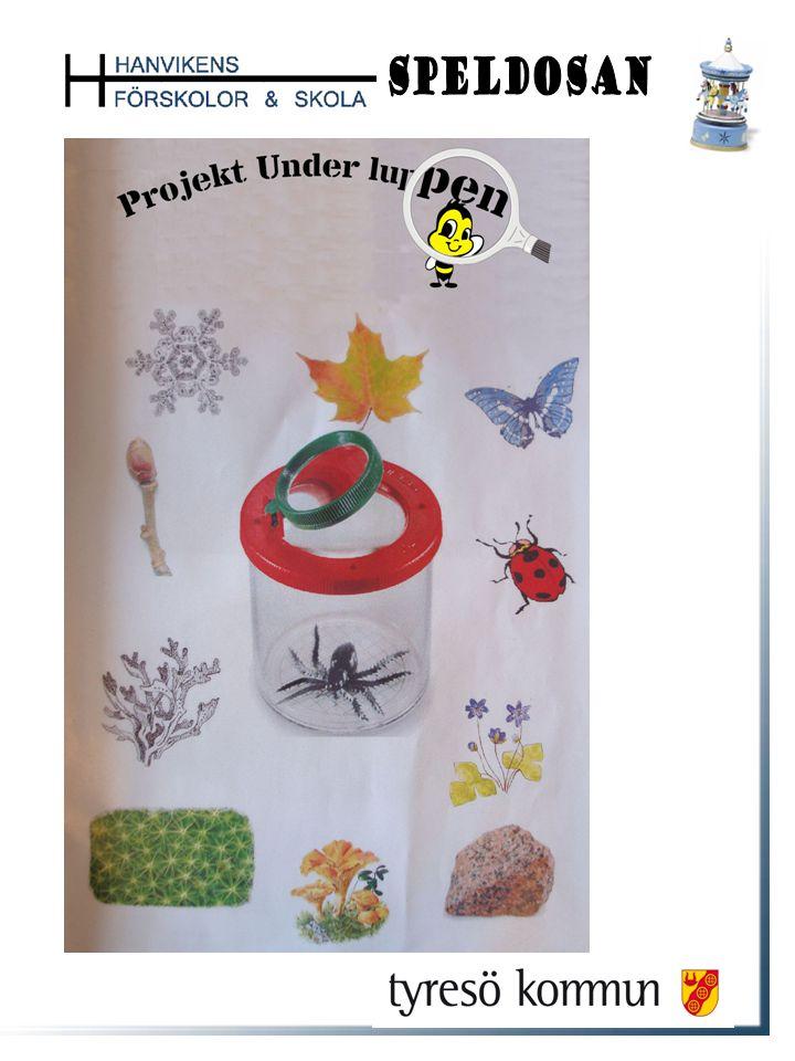 Projekt Under luppen 07/08 Projektet startade sommaren 07 med att alla barnen fick som sommaruppgift att vara naturdetektiver och hitta något spännande som de kunde ta kort på eller ta med till förskolan.