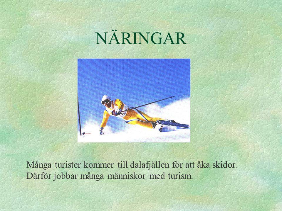 NÄRINGAR Många turister kommer till dalafjällen för att åka skidor. Därför jobbar många människor med turism.