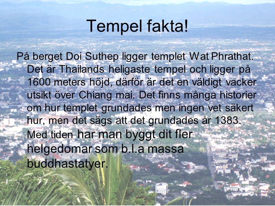 Tempel fakta! På berget Doi Suthep ligger templet Wat Phrathat. Det är Thailands heligaste tempel och ligger på 1600 meters höjd, därför är det en väl