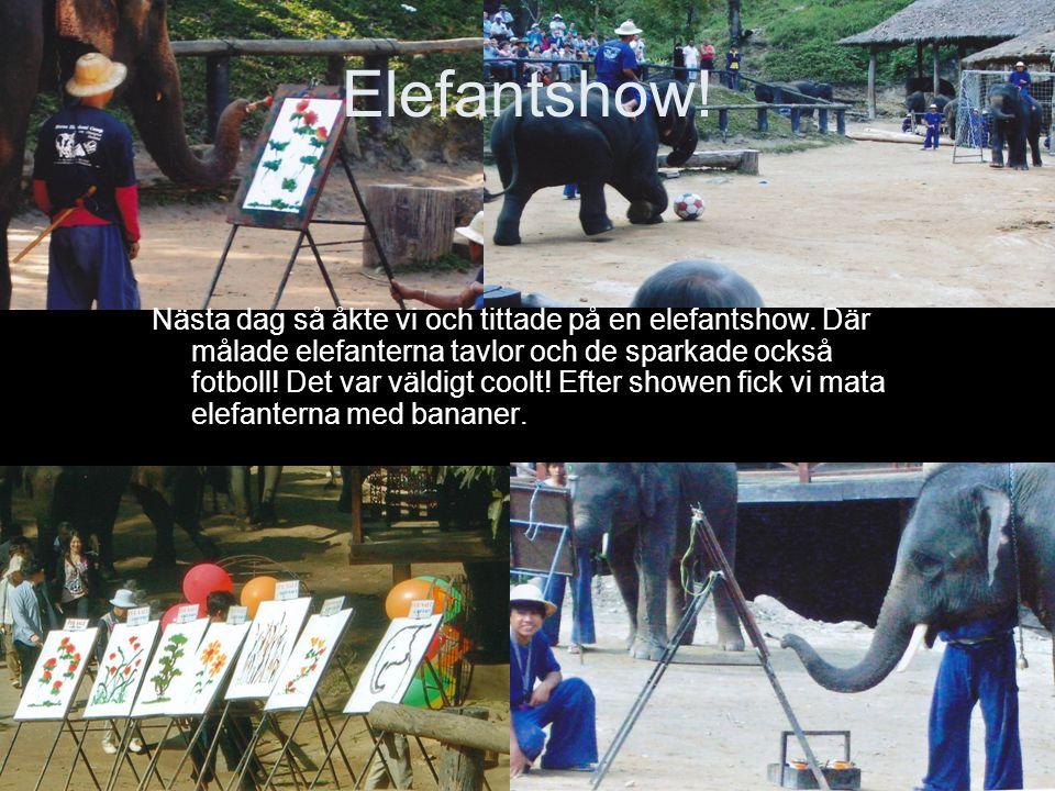 Elefantshow! Nästa dag så åkte vi och tittade på en elefantshow. Där målade elefanterna tavlor och de sparkade också fotboll! Det var väldigt coolt! E
