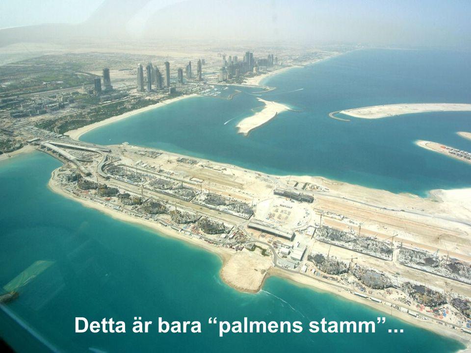 """Detta är bara """"palmens stamm""""..."""