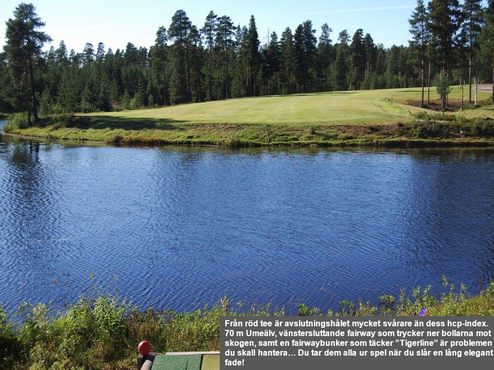 Från röd tee är avslutningshålet mycket svårare än dess hcp-index. 70 m Umeälv, vänstersluttande fairway som trycker ner bollarna mot skogen, samt en