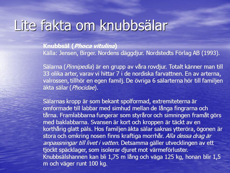 Lite fakta om knubbsälar Knubbsäl (Phoca vitulina) Källa: Jensen, Birger. Nordens däggdjur. Nordstedts Förlag AB (1993). Sälarna (Pinnipedia) är en gr