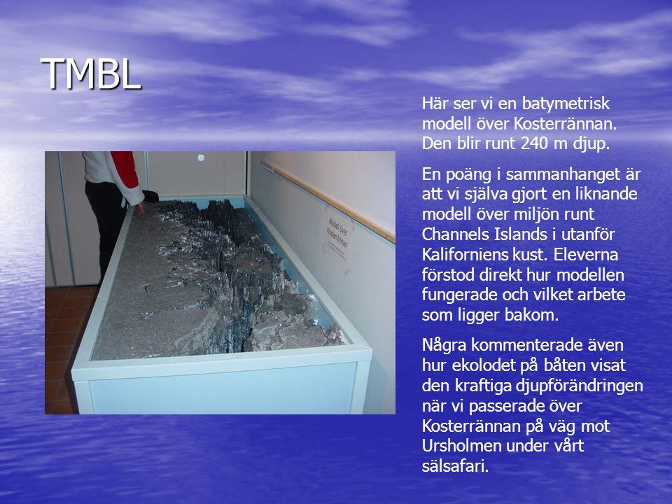TMBL Här ser vi en batymetrisk modell över Kosterrännan. Den blir runt 240 m djup. En poäng i sammanhanget är att vi själva gjort en liknande modell ö