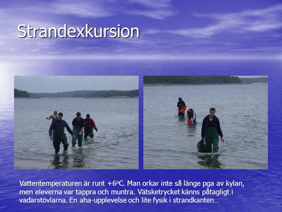 Strandexkursion Vattentemperaturen är runt +6 o C. Man orkar inte så länge pga av kylan, men eleverna var tappra och muntra. Vätsketrycket känns påtag