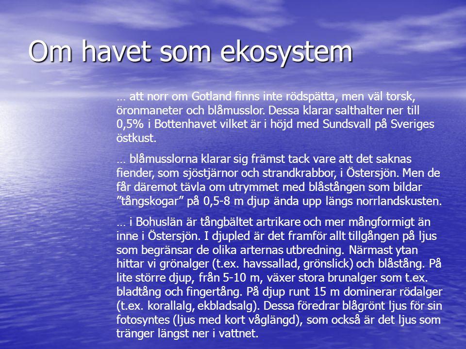 Om havet som ekosystem … att norr om Gotland finns inte rödspätta, men väl torsk, öronmaneter och blåmusslor. Dessa klarar salthalter ner till 0,5% i