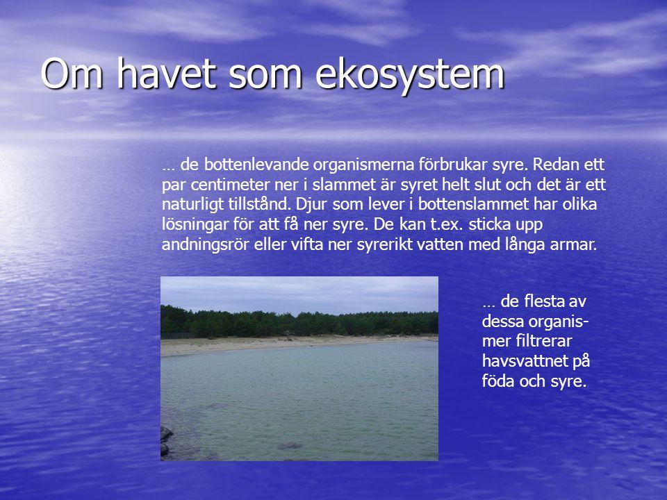 Om havet som ekosystem … de bottenlevande organismerna förbrukar syre. Redan ett par centimeter ner i slammet är syret helt slut och det är ett naturl