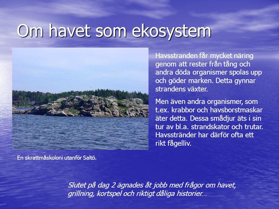 Om havet som ekosystem Havsstranden får mycket näring genom att rester från tång och andra döda organismer spolas upp och göder marken. Detta gynnar s