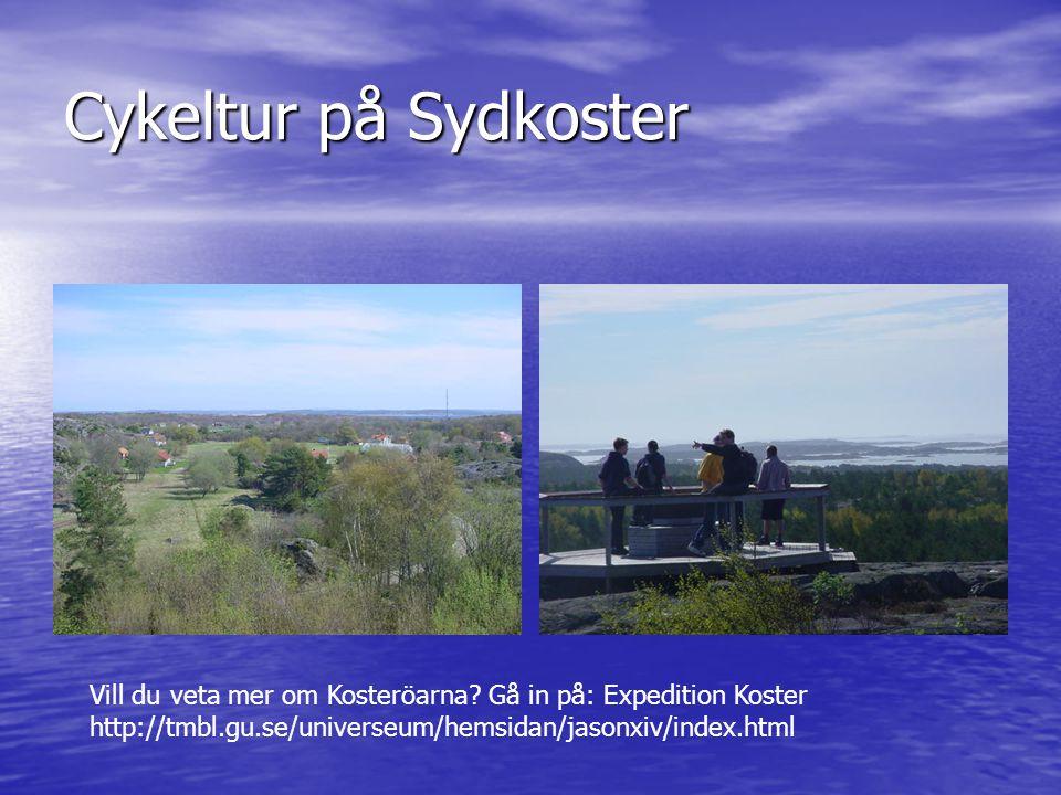 Cykeltur på Sydkoster Vill du veta mer om Kosteröarna? Gå in på: Expedition Koster http://tmbl.gu.se/universeum/hemsidan/jasonxiv/index.html
