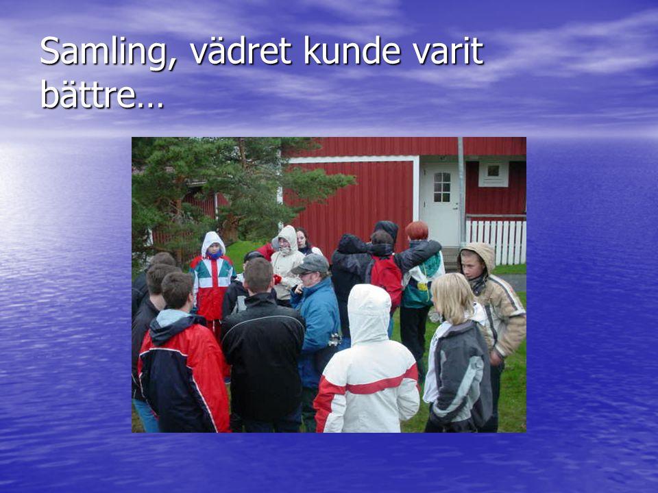 Lite fakta om knubbsälar Knubbsäl (Phoca vitulina) Källa: Jensen, Birger.