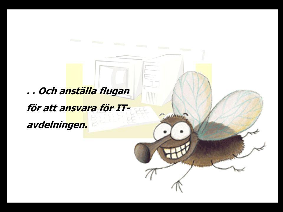 .. Och anställa flugan för att ansvara för IT- avdelningen.