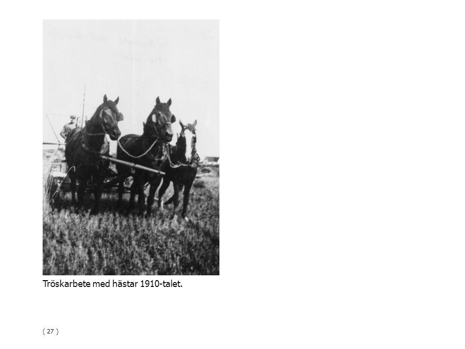 Tröskarbete med hästar 1910-talet. ( 27 )