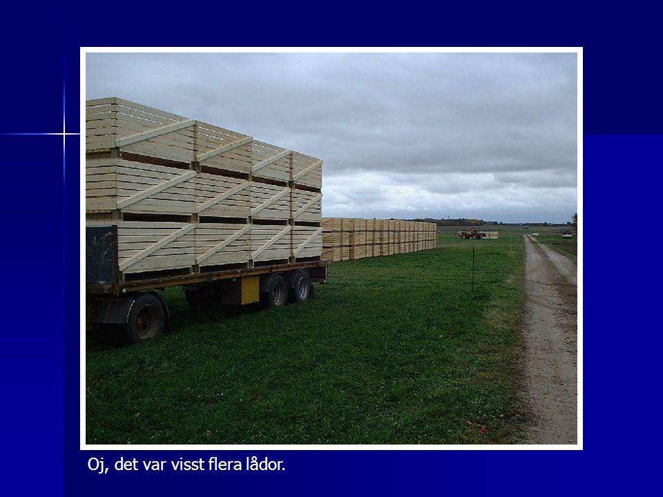 Så där går det till med morotskörd på en exemplarisk KRAV-gård i Blekinge.