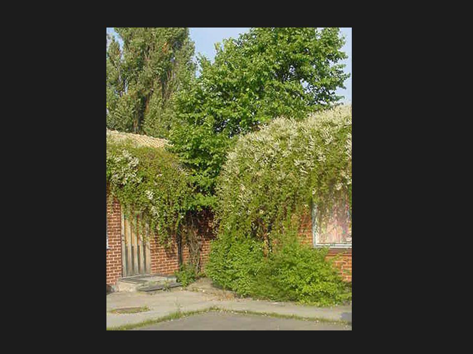 Kryddträdgård, ett annat inslag