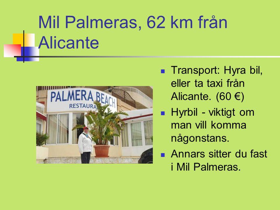Mil Palmeras, 62 km från Alicante  Transport: Hyra bil, eller ta taxi från Alicante.