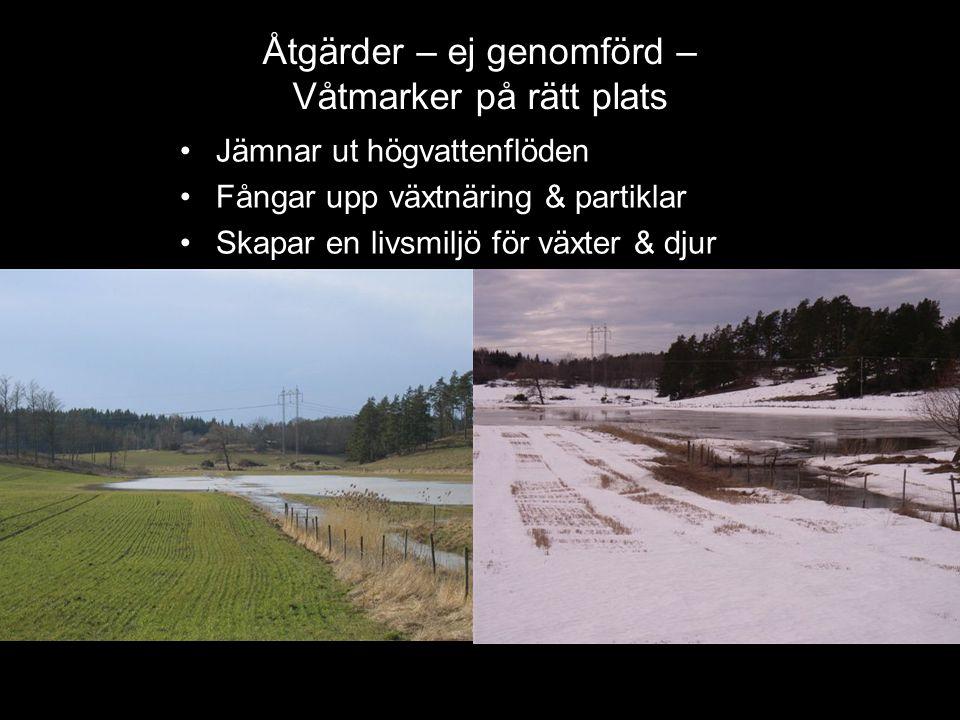 •Jämnar ut högvattenflöden •Fångar upp växtnäring & partiklar •Skapar en livsmiljö för växter & djur Åtgärder – ej genomförd – Våtmarker på rätt plats