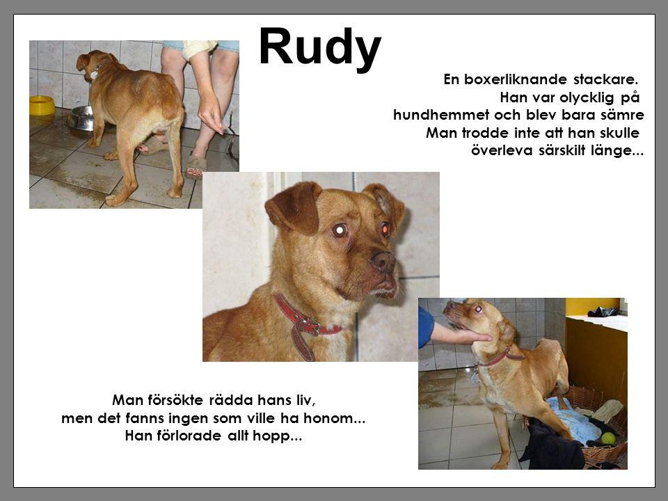 Rudy En boxerliknande stackare. Han var olycklig på hundhemmet och blev bara sämre Man trodde inte att han skulle överleva särskilt länge... Man försö