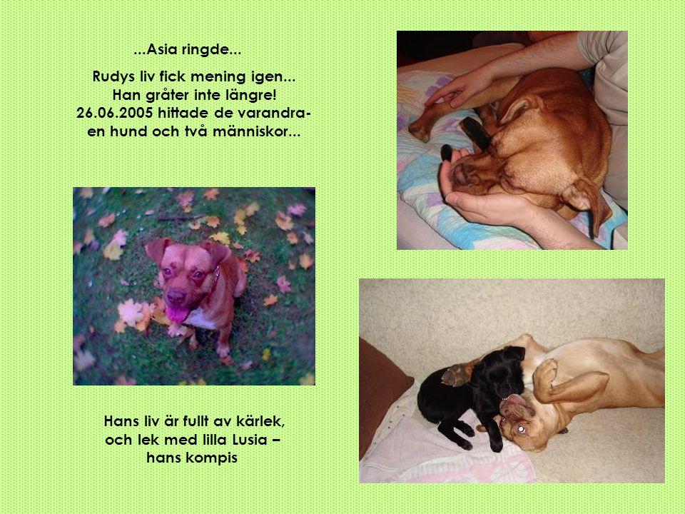 ...Asia ringde... Rudys liv fick mening igen... Han gråter inte längre! 26.06.2005 hittade de varandra- en hund och två människor... Hans liv är fullt