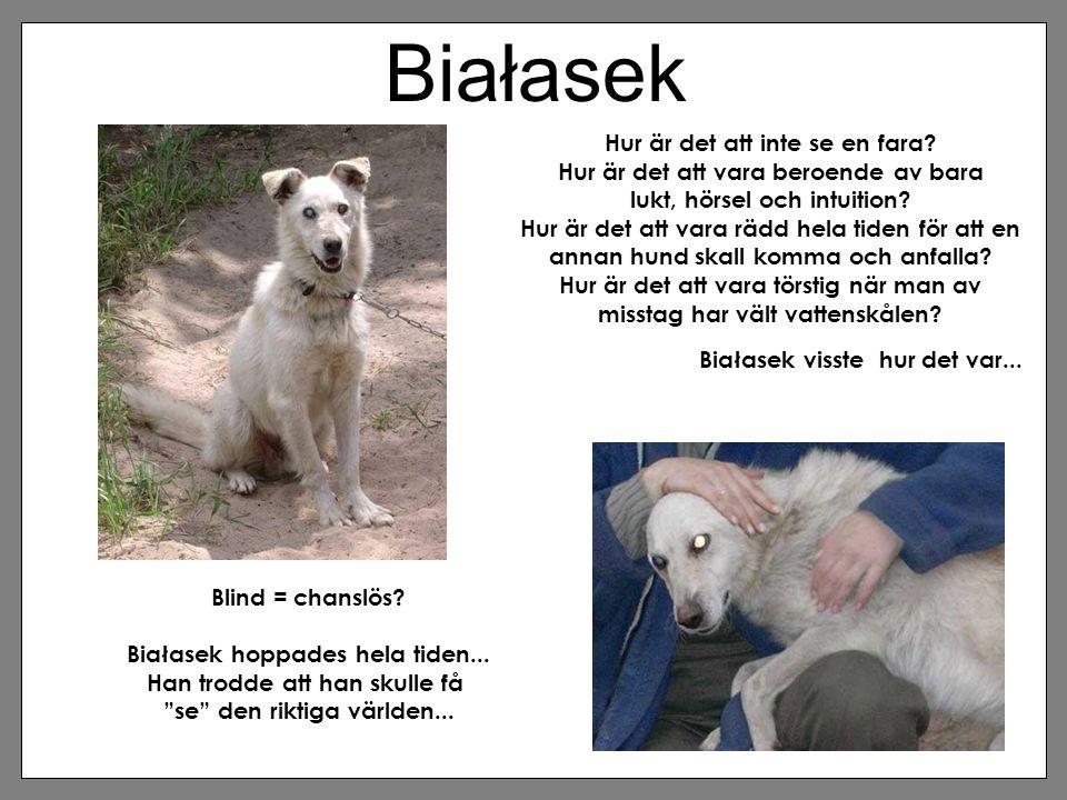"""Białasek Blind = chanslös? Białasek hoppades hela tiden... Han trodde att han skulle få """"se"""" den riktiga världen... Hur är det att inte se en fara? Hu"""