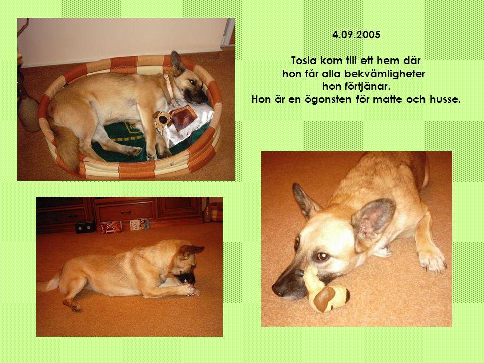 4.09.2005 Tosia kom till ett hem där hon får alla bekvämligheter hon förtjänar. Hon är en ögonsten för matte och husse.