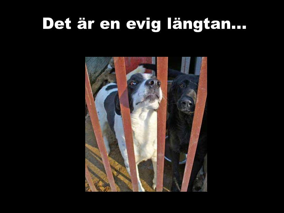 Tosia Tosia var en hund som alla andra.Tills den dag då en argsint hund attackerade henne....