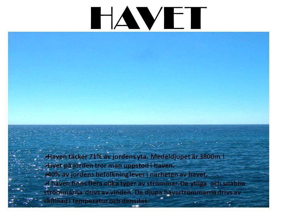 HAVET  Haven täcker 71% av jordens yta.Medeldjupet är 3800m .
