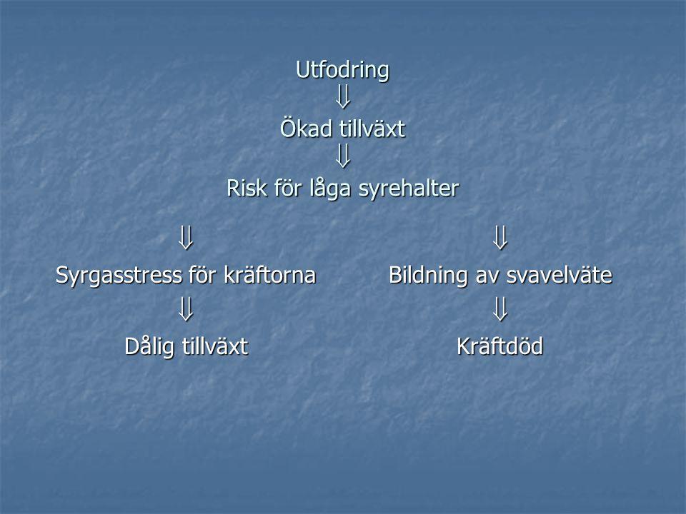 Utfodring  Ökad tillväxt  Risk för låga syrehalter  Syrgasstress för kräftorna  Dålig tillväxt  Bildning av svavelväte Kräftdöd