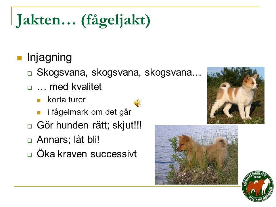 Jakten… (fågeljakt)  Injagning  Skogsvana, skogsvana, skogsvana…  … med kvalitet  korta turer  i fågelmark om det går  Gör hunden rätt; skjut!!!