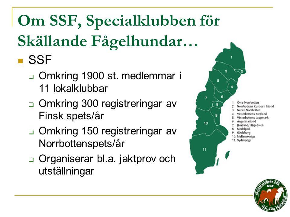 Om SSF, Specialklubben för Skällande Fågelhundar…  SSF  Omkring 1900 st. medlemmar i 11 lokalklubbar  Omkring 300 registreringar av Finsk spets/år
